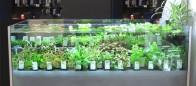 Biogenesi, per non gettare le piante in vasca